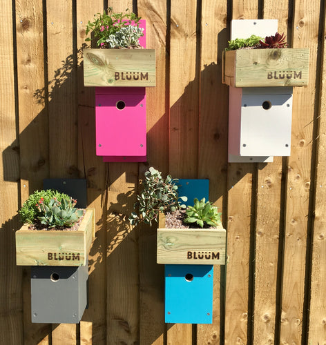 Bluum Stores bird nesting box with living green roof planting area, in pink, white, grey, mint or blue colour