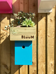 Blue bird nesting box with succulent plants in the roof to insulate the nest area