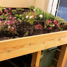 Green roof with plants on wheelie bin and recycling storage unit