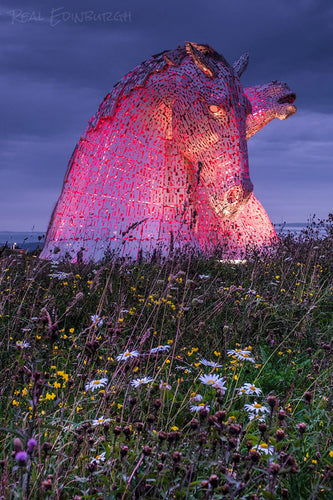 Kelpies and Daisys