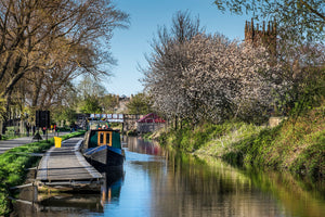 Union Canal Blossoms