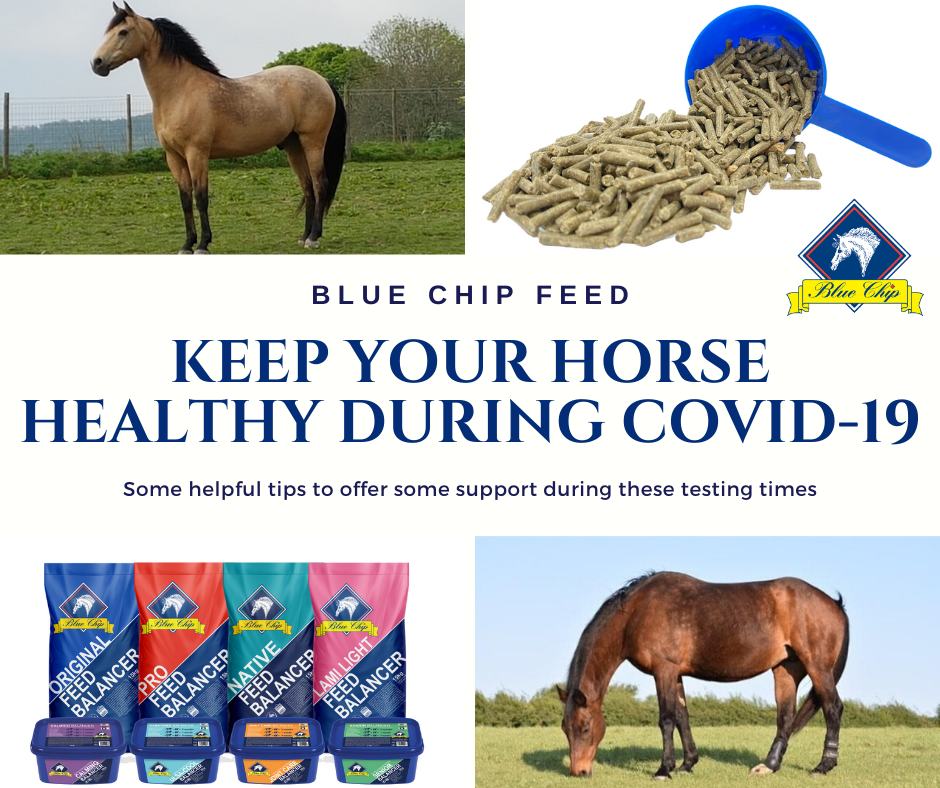 How can I keep my horse healthy during the COVID-19 lockdown?