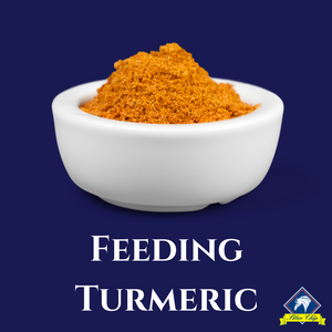 Whats the fuss about Turmeric?