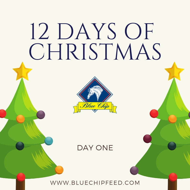 12 days of Christmas Giveaway - Day ONE