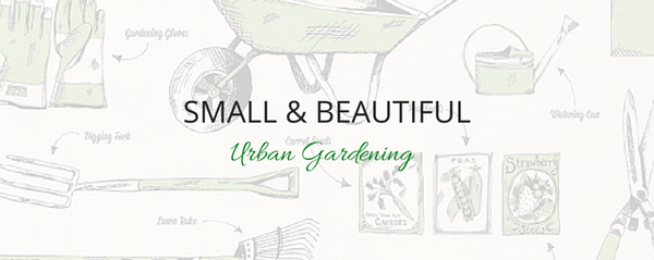Small and Beautiful Urban Gardening