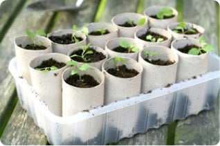 Blog Gardening toilet Roll
