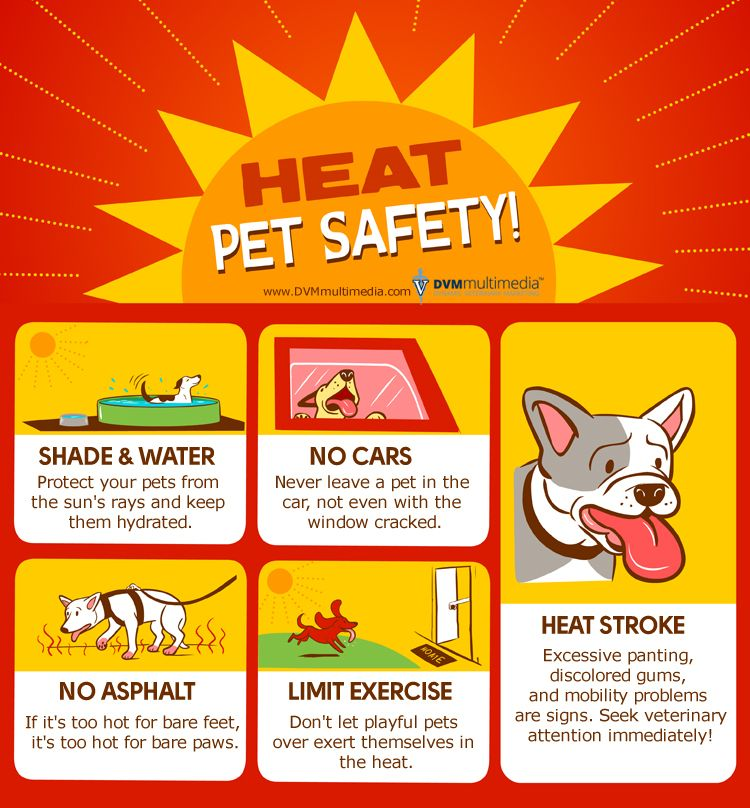 Hot Weather Tips to Keep Your Pets Safe in the Summer