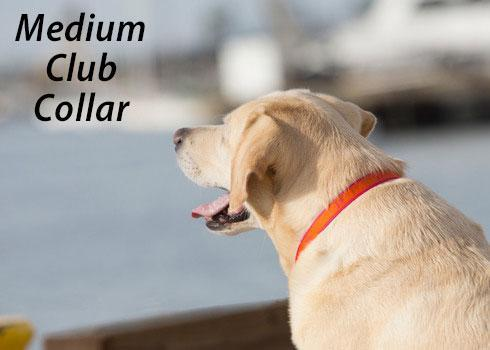Poocheo:Lupine Club Collection Adjustable Nylon Collar - Sunset Orange (Multiple Sizes Available)