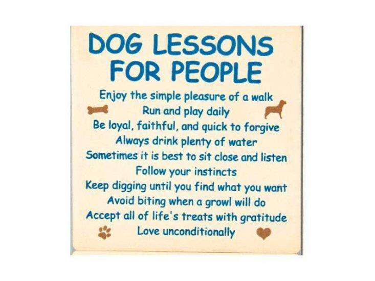 Poocheo:Stone Coaster Set of 4 - Favorite Dog Sayings