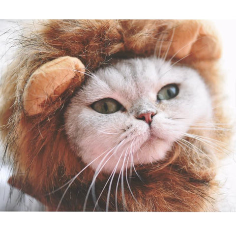 Lion Mane Cat Costume  (FULL MANE VERSION) - Turn Your Kitty Into A Lion