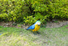 Garden Ornament Patricia The Parrot