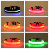 LED Dog Collar for Night SAFETY