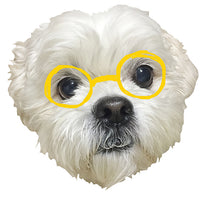 A super duper cute Shih-Tzu-Bichon mix head cut with yellow illustrated eyeglasses on.
