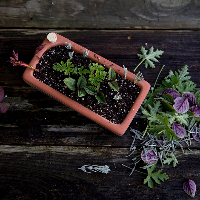 This Weekend:  How to propagate with softwood cuttings