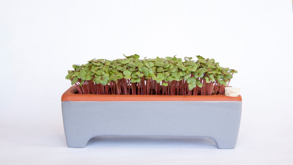 self watering zero waste microgreen planter