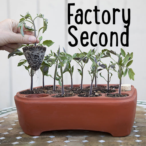 Factory Second 12-Pack