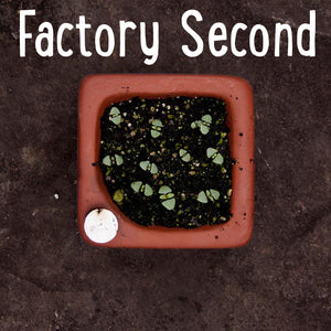 Factory Second Square Seed Tray