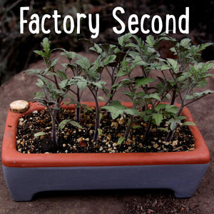 Factory Second Rectangle Seed Tray