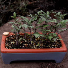 Rectangle Self-Watering Seed Tray