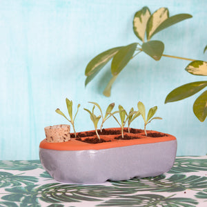 Sixie Self Watering Seed Pot