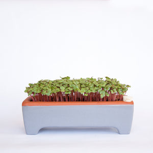Large Microgreen Kit, Zero Waste and Self-Watering