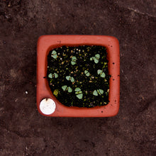 Square Self-Watering Seed Tray