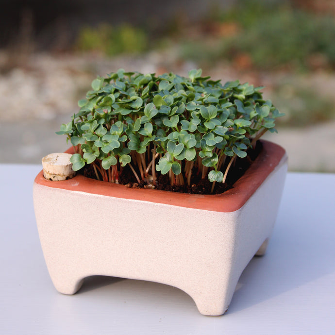 Microgreen Kit, Zero Waste and Self Watering
