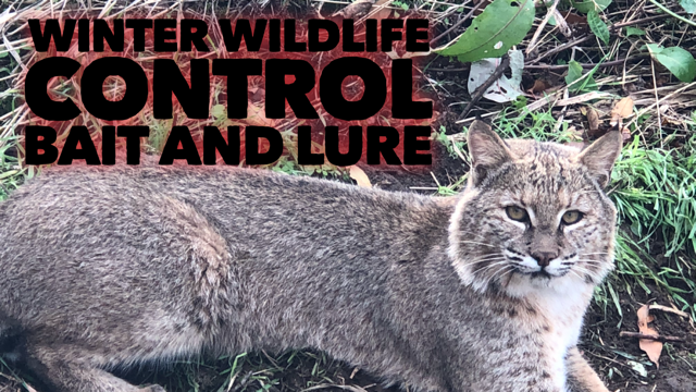 Winter Wildlife Control Bait and Lure