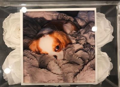 Customize a picture of your pet on the lucite lid - Roses Ever After