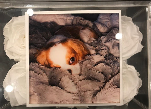 Customize a picture of your pet on the lucite lid