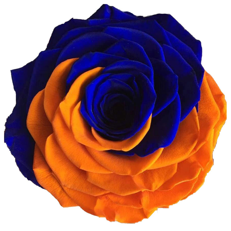 Blue and Orange schools - Syracuse - Roses Ever After