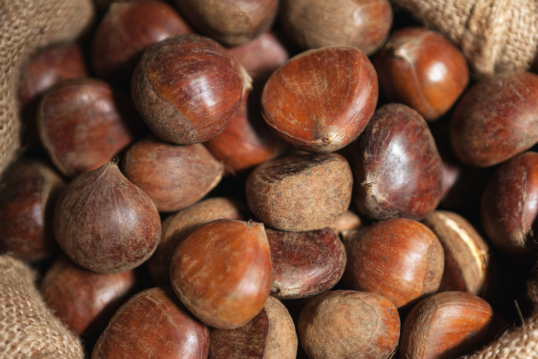 Fresh Chestnuts (X-Large)