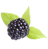 Fig Fruit Extract