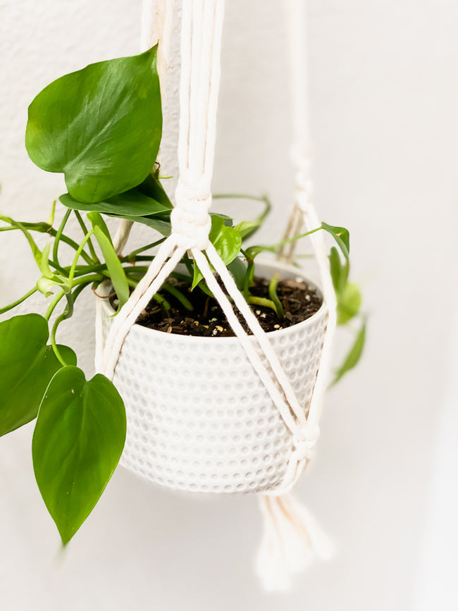 MACRAME TIED PLANT HANGER | STYLE OPTIONS