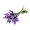 Lavender Essential Oil-Your Wellness-Awaken Store