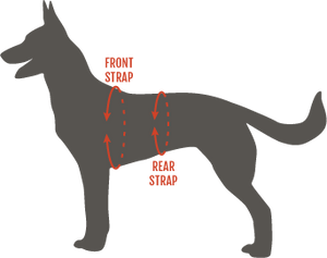 Modern Icon Tracking Harness