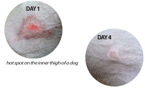 JJJee recover from Hotspots and skin infection in only days without antibiotics