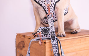 NEW - Adjustable Harness Dots