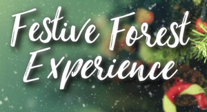 Festive Forest Experience