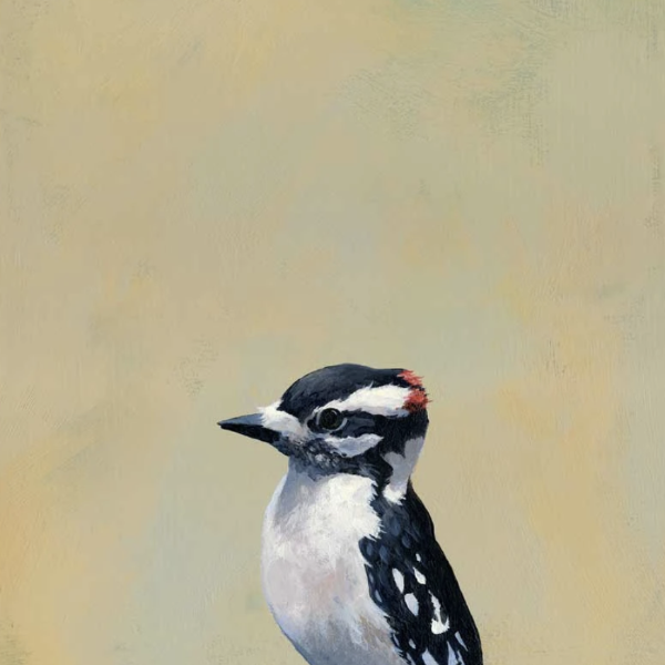 Downy Woodpecker Wall Art