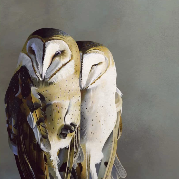 Barn Owl Pair Wall Art