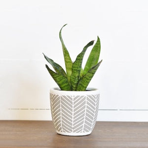 Chevron pot