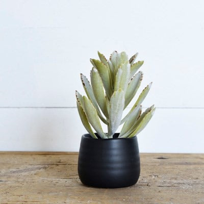 SUCCULENT IN CERAMIC POT