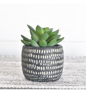 Black Pot Succulent