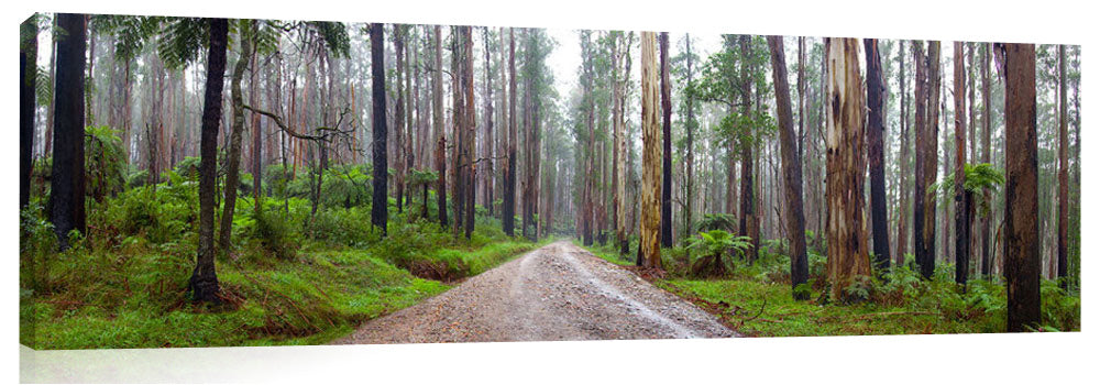 Rainforest in the Dandenong ranges.
