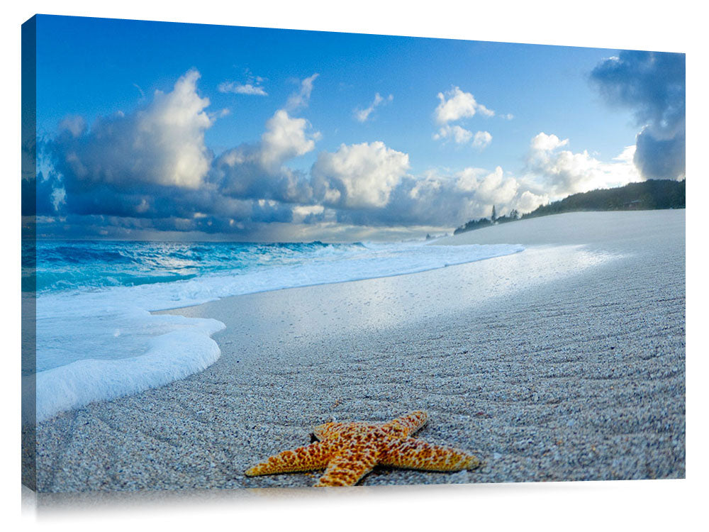 A starfish on the beach at sunrise.