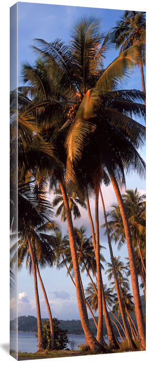 217-Bora-Palm-trees-50RGB_c