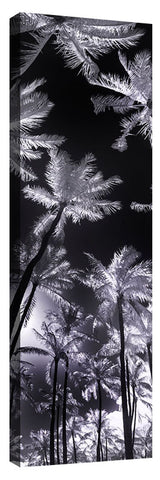Frosted_Palms_