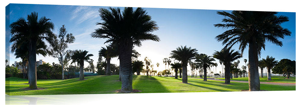 Mission_Bay_Palms