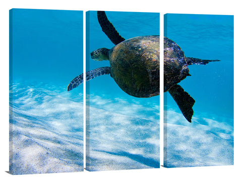 under water view of Hawaiian sea turtle at Ehukai beach, north s
